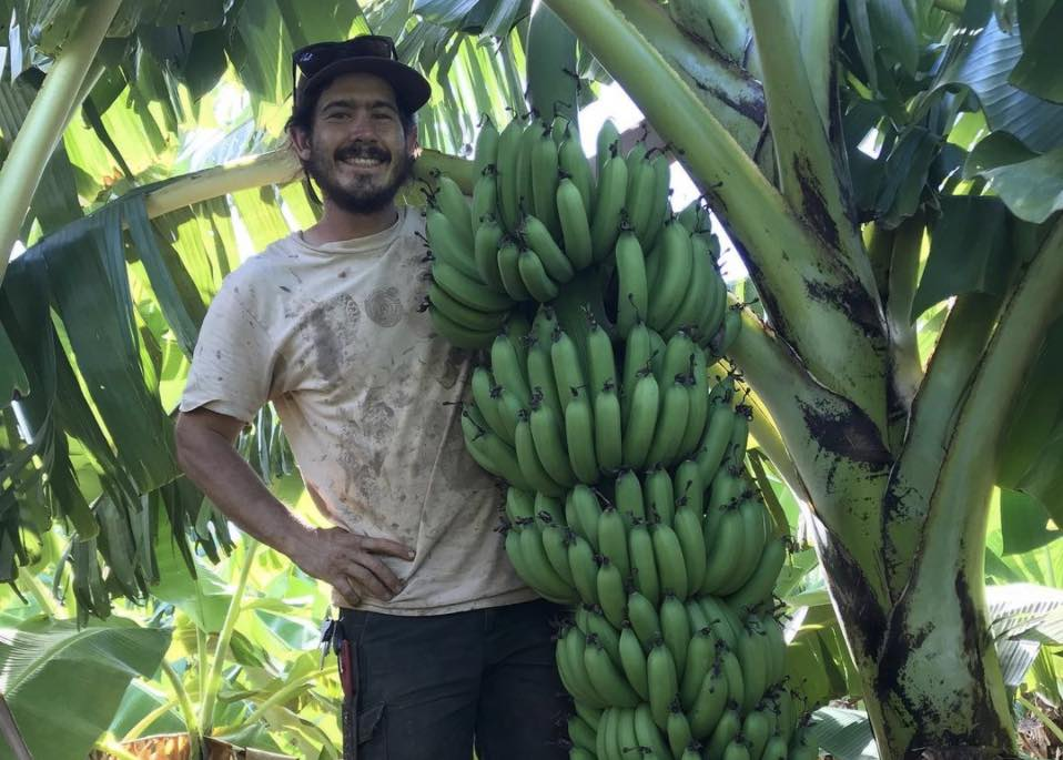 Hawaii Banana Source
