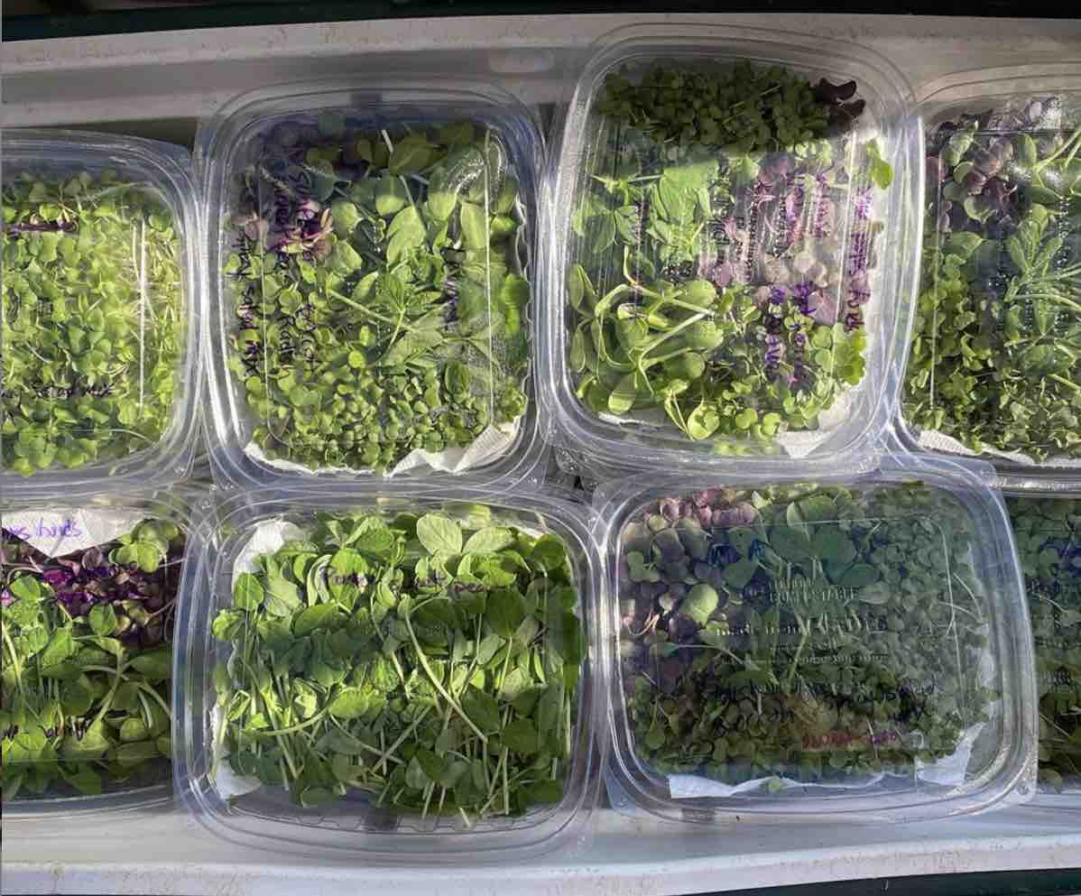 Hukilau Farms Microgreens