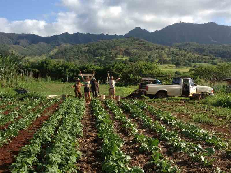Mohala Farms
